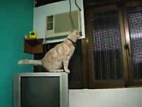 テレビの上から狙いを定めてムズムズジャンプをしようとしたニャンコが・・・。