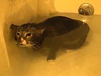 お風呂に浸けられて何かを訴えるように鳴くニャンコ(´・_・`)早く出してあげて。