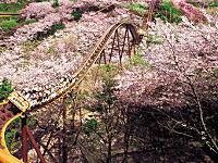 こんなお花見は嫌だ。桜の中を最高時速110キロで走り抜ける史上最速のお花見