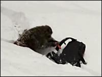 雪崩用エアバッグに焦りまくるお猿さんのビデオ。どんなイタズラだよwww