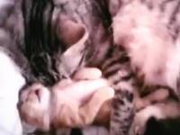 寝ながら両手ピクンっ!ピクンッ!な子猫とムニャムニャコッチのおいで母猫