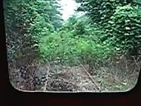 自然に覆われて線路が見えなくなってしまった場所を突き進む列車の車窓