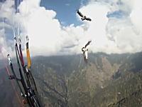 パラグライダーに野生の鷹が衝突。緊急事態を冷静な判断で乗り切った男性