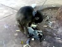 可愛いニャンコがお猿さんに犯されかけているYouTube。助けてやれよwww
