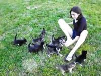たくさんの子猫に追いかけられるお姉さんの幸せそうなビデオ。羨ましい。