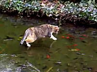 氷の下を泳ぐ魚に興味深々なニャンコさんのほのぼのムービー