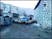 メエメエ動画。高速回転するヒツジに阻まれて身動きが取れないクルマwww