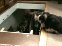 極悪なネコの一瞬動画。階段を下りる仲間のネコを後ろから・・・。これは酷い