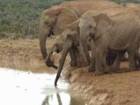水飲み場に落ちてしまった赤ちゃん象をみんなで助ける愛のゾウゾウ動画