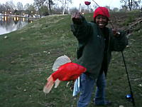 これはマジか?w湖でナマズ釣りをしていたら巨大な金魚が釣れてしもたw
