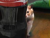 コカコーラのボトルの奥から┃_・) ジーっと見つめるハムスターが可愛いwww