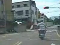 台湾で凄いライダー発見。バイクに乗りながら鳥さんの散歩!?これはレア。