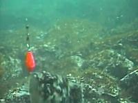 魚釣り動画。魚が餌に食いつく映像を水中カメラで。釣れた瞬間バレた瞬間。