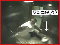 チワワがボッコボコに(@_@;)エレベーター内で虐待される酷すぎる映像が公開される