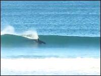 海が恋しくなるナツナツ動画。サーフィンの様に波で遊んでいるシャチさん