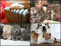 ニャン5。猫に萌えるネコネコ動画5つ。子猫×4匹横並びは反則やろ(*´Д`)