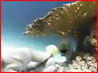 ウツボに餌付けしていた男性が親指を噛みちぎられるアクシデントの映像