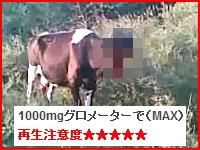 顔面を吹き飛ばされた状態で線路わきにたたずむ牛の映像。(再生注意)