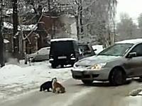 道路のど真ん中で喧嘩をしているネコ2匹。最後のおっさんが酷過ぎるwww