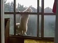 ミッションインポッシブルなネコが可愛い動画。さすがに高いので慎重なネコ