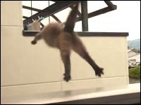 家主に見つかりベランダから逃走を図るネコが・・・。この後どうなったwww