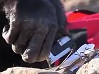 より人間に近い知性を持ったチンパンジー「カンジ」火を起こして火を使う