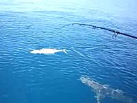 魚釣り。長い格闘の後、釣り上げ間近かと思われた所をサメに奪われてしまう