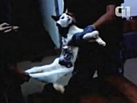 ブラジルの刑務所で脱獄の為に利用されたニャンコがカワイソウな動画像。