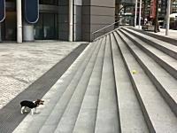 一人遊び犬の別角度の動画あったったwwwwwやっぱりカワユスなあ(*´Д`)