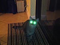 これはコラじゃなくて?ニャンコの目がネコネコビーーーム!なネコネコ動画