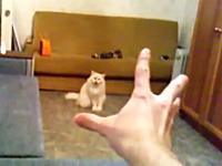 ハンドパワーの力に操られてしまうネコの映像。最後のお前はでてくんなww