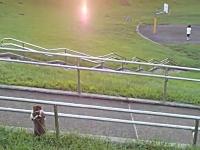 夕暮れの河川敷でまどろむニャンコが撮影される。なんだこいつはカワイイw