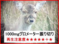 狩り動画。鹿のヘッドショットの瞬間をズームで撮影した映像がヤバい。注意。