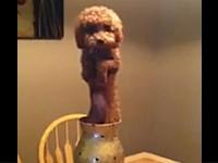 ぬいぐるみではない。花瓶に入れられておかしな事になっているワンコの映像。