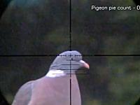 空気銃でハンティング。スコープ視点で見るハト、ウサギ、シマリス狩り動画