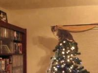 足場を考えずにジャンプして失敗したネコ。もう最初からこうなると思ったw