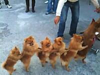 なにこれ可愛いwwwwwチャリ・イヌ・イヌ・イヌ・イヌ・イヌ・イヌ・イヌ動画。