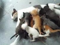ママン大変すぎるwwwママ猫のおっぱいに16匹の子猫が群がってさあ大変