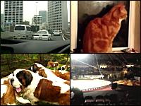 1000mgボツネタ一覧Part.8。首都高でオラオラする走り屋vs軽バン。他5つ