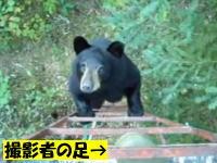 ぎゃあああ!野生の熊が足場を登ってきた(@_@;)これは近すぎヤバイw