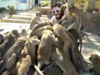 これはちょっと怖いなw大量の猿に群がられる男性の映像。何匹いるんだ?