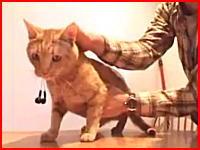 猫にイヤホンを食べさせて口から肛門へと通す。これは一瞬ドキッとしたわw
