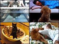 ネコ動画の決定版。見るだけで幸せなネコネコ動画の一覧。キュートすぎる。