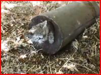 生きたままコンクリート詰めにされ身動きが取れないニャンコが発見される。
