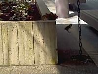 親鳥からしたら段差でも雛鳥からしたら崖。難易度が高い場所を通るママン。
