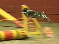 訓練されたワンコはこんなに凄い。目にも留まらぬ速さで障害物を駆け抜ける