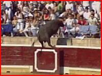 18日スペインの闘牛で牛が観客席に乱入し約30人が負傷する事故の映像
