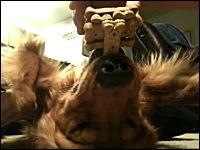やっぱりあのバランス犬は凄かった。口の上でもバランスお菓子13段できるよ