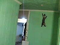 この猫SUGEEEE!これはニャンジャだな。垂直壁登りニャンコがカワイイ
