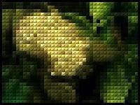 水中に潜むエイリアン「ピパピパ」蓮コラ並みの破壊力を持つ産卵風景とは